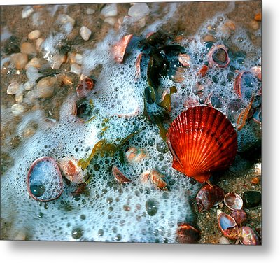 Metal Print featuring the photograph Scallop And Seaweed 11c by Gerry Gantt