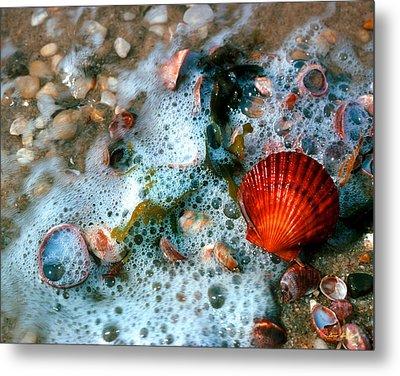 Scallop And Seaweed 11c Metal Print by Gerry Gantt
