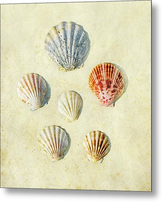 Scallop Shells Metal Print by Paul Grand Image
