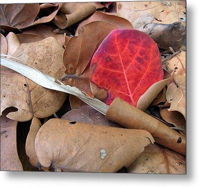 Scarlet Seagrape Leaf Still Life Metal Print