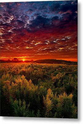 Scarlett Metal Print by Phil Koch
