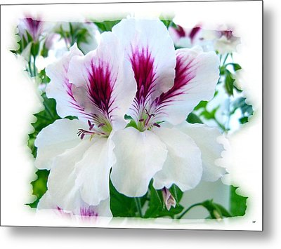 Scented Geraniums 2 Metal Print by Will Borden