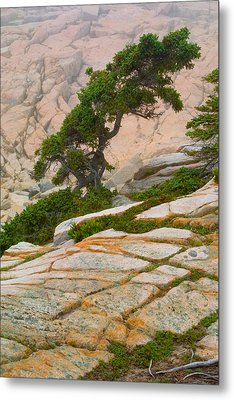 Metal Print featuring the photograph Schoodic Cliffs by Brent L Ander