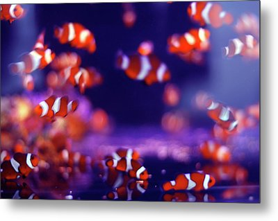 School Of Fish Metal Print by Yuki Crawford