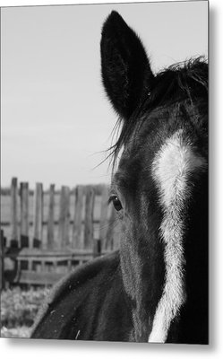Scratches Metal Print by Ellery Russell