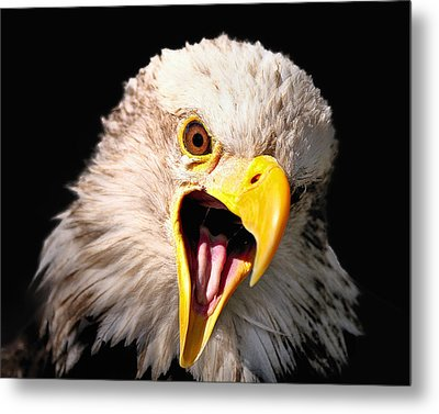Screaming Eagle II Black Metal Print