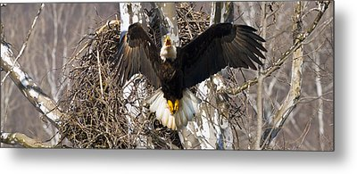 Metal Print featuring the photograph Screaming Eagle  by Randall Branham