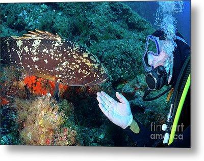 Scuba Diver With A Dusky Grouper Metal Print by Sami Sarkis