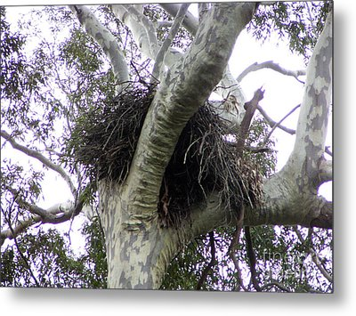 Sea Eagle Nest Metal Print