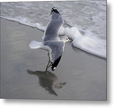 Sea Gull By The Sea Shore Metal Print by Paulette Thomas