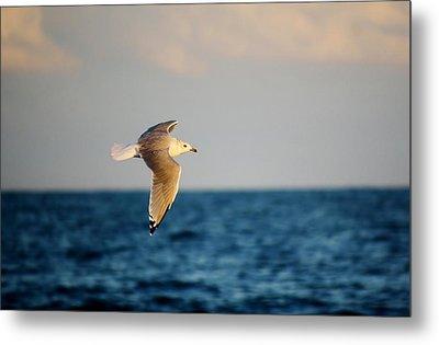 Sea Gull Over The Ocean Metal Print by Paulette Thomas