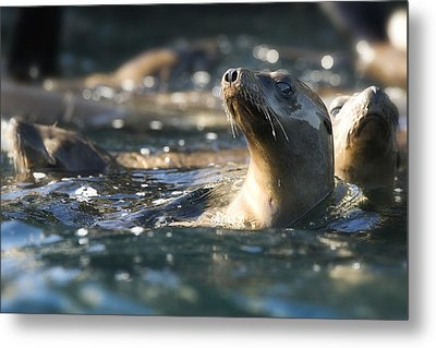 Sea Lion And Friends Metal Print