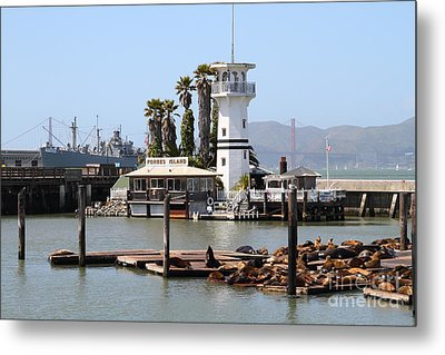 Sea Lions At Pier 39 San Francisco California . 7d14294 Metal Print by Wingsdomain Art and Photography