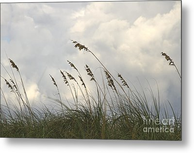 Sea Oats Metal Print by Blink Images