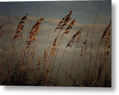 Metal Print featuring the photograph Sea Oats by Joetta West