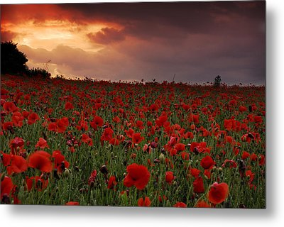 Metal Print featuring the photograph Sea Of Poppies by John Chivers