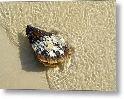 Sea Scallop Ride Metal Print by Florene Welebny