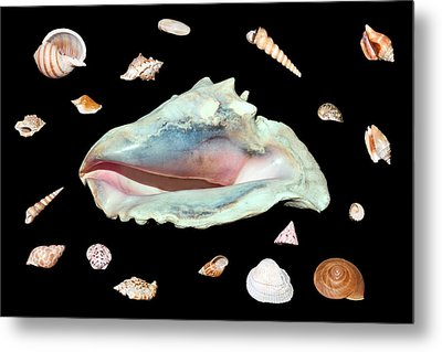Metal Print featuring the photograph Sea Shells by David Lester