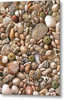 Sea Shells  Metal Print by Mauro Celotti