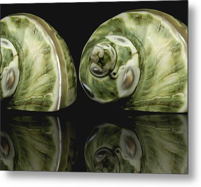 Sea Shells Photography Still Life Metal Print by Ann Powell