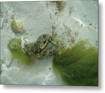 Sea Slug Metal Print by Kimberly Perry