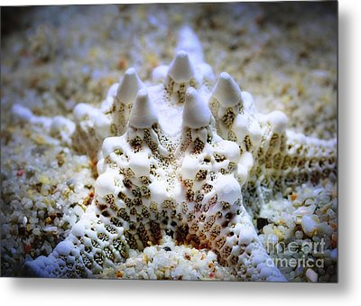 Sea Star Metal Print by Judi Bagwell