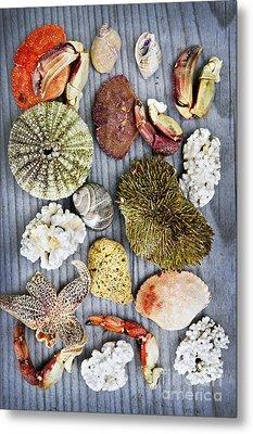 Sea Treasures Metal Print by Elena Elisseeva