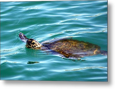 Sea Turtle Metal Print by Jeanne Andrews