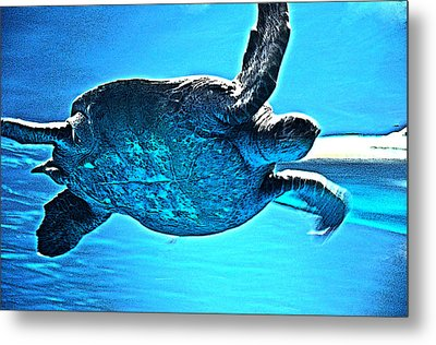 Sea Turtle Metal Print by Coconut Lime Design