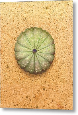 Sea Urchin Metal Print by Katherine Young-Beck