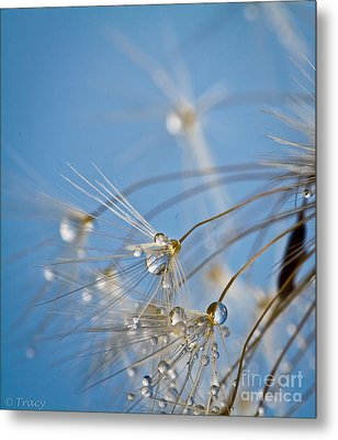 Seabreeze Metal Print by Tracy  Hall