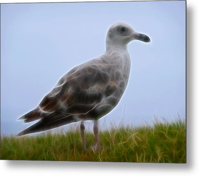 Seagull Abstract Metal Print by Cindy Wright