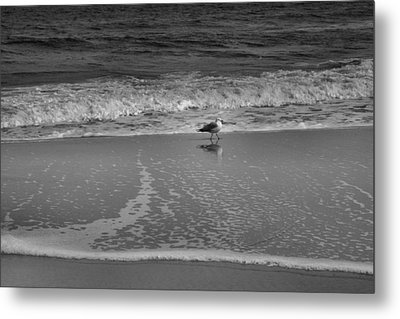 Seagull And Surf Metal Print by Steven Ainsworth