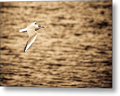 Seagull Antiqued Metal Print