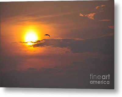 Seagull At Sunset Metal Print by Fred Fishkin