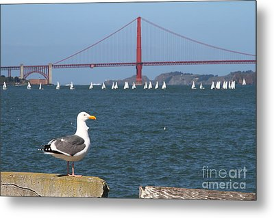 Seagull Enjoying The Sailboats On The San Francisco Bay . 7d14041 Metal Print by Wingsdomain Art and Photography