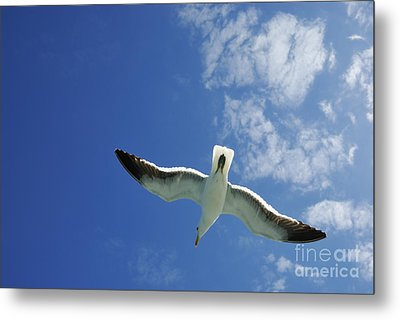 Seagull Flying In The Sky On Blue Sky Metal Print by Sami Sarkis