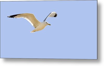 Seagull In Flight Metal Print by Don Hammond