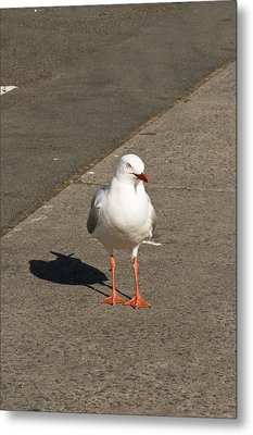 Seagull In The Summer Sun Metal Print by U Schade