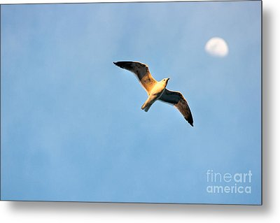 Metal Print featuring the photograph Seagull by Luciano Mortula