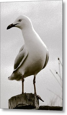 Seagull On Post Metal Print by Serene Maisey