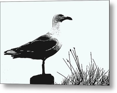 Metal Print featuring the photograph Seagull  by Serene Maisey