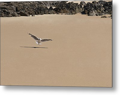 Seagull Spreads Its Wings On The Beach  Metal Print by Ulrich Schade