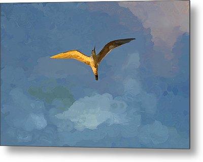 Seagull Sunrise Metal Print by Miguel Pumarejo
