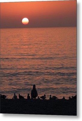 Seagulls Watching Sunset Metal Print