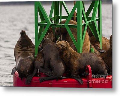 Seals Warming Up Metal Print