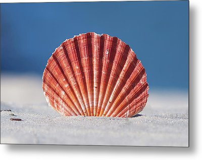 Seashell In Sand With Blue Ocean Background Metal Print by Tanya Ann Photography