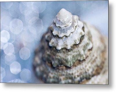 Seashell Metal Print by Lauren Tolbert Miller