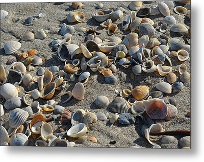 Seashells In The Sand Metal Print by Brenda Thimlar