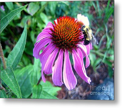 Metal Print featuring the photograph Season For Echinacea  by Kathy Bassett
